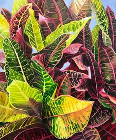 Colorful Crotons by Sally Painter from AWA's 2017 spring online juried show. #womenartists #springonlineshow17
