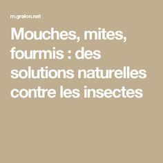Mouches, mites, fourmis : des solutions naturelles contre les insectes