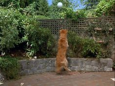Screencap Gallery for Air Bud: Spikes Back (2003) (480p DVD, Air Bud / Buddies, Disney Live-Action). In Disney's fifth installment to the franchise, Air Bud finds that he also has the uncanny ability to play volleyball. Throughout this experience he and a