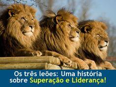 Siga em frente!: Os Três Leões