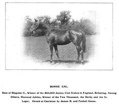 Northern Dancer Horse Pedigree