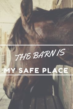 Where do you go when you are stressed? I visit the barn. Confessions of a Timid Rider