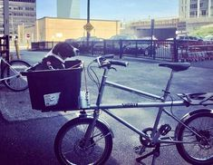 Firth & Wilson (@transportcycle) | Twitter Cargo Bike, Bicycle, Pets, Twitter, Bicycle Kick, Bike, Bicycles, Animals And Pets