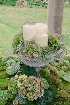Decorating With Succulents With Pottery Barn - Yahoo Search Results Yahoo Image Search Results