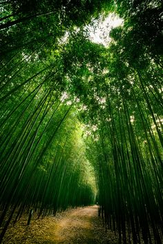 Taehwa River Bamboo Forest, Ulsan, South Korea by JTeale
