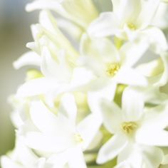 White flowers. #Spring #Beautiful