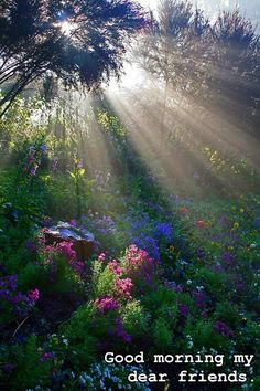 """you could think at the movie """"the secret garden"""", it could posted right out of it, but this is the beauty of nature, not a fantasy; Sunbeams in the forest. Beautiful World, Beautiful Gardens, Beautiful Places, Trees Beautiful, Beautiful Morning, Beautiful Flowers Pics, Beautiful Sunrise, All Nature, Amazing Nature"""