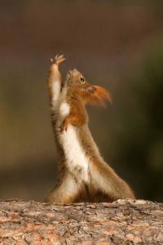 The acorn reach...or...Saturday night fever impersonation?   You choose.