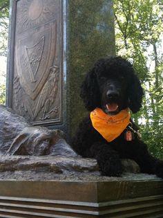 Gettysburg Battleground Irish Memorial - Poodle tribute to the fallen dogs of war.