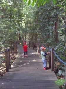 #Singapore   parents - our adventure for the week - Rainforest Walk in the Singapore Botanical Gardens. We think this beautiful place is often missed within these huge gardens. If fact, we missed it for 10 years http://singaporekids365.com/2012/07/21/40-botanical-gardens-rainforest-walk/