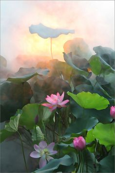 Lotus Flower - IMG_1275-1-1000 by Bahman Farzad, via Flickr