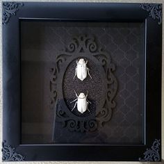 Real Gothic Taxidermy Beetles Framed Insect Wall by RevenantArts
