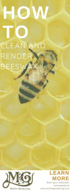How to clean and render beeswax at home. #beekeeping