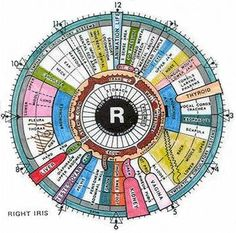 Iridology, or iris analysis or iris diagnoses, is a method of alternative medicine that is used to analyze a person's health status by examining the colors, components of the iris, pupil and sclera of the human eye.
