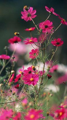 Nature Little Flower Branch #iPhone #5s #Wallpaper
