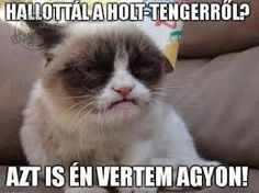 Looking for the worlds best Grumpy Cat memes? This is where you will laugh for butt off at a list of this famous cat. Grumpy Cat Quotes, Meme Grumpy Cat, Gato Grumpy, Cat Memes, Funny Memes, Grumpy Kitty, Grump Cat, Grumpy Face, Hilarious Sayings
