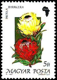 Znaczek: Protea barbigera (Węgry) (Flora of Africa) Mi:HU 3266 Flower Stamp, Flora, Africa, Stamps, Pride, Wood, Seals, Plants, Postage Stamps