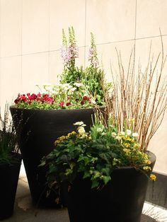 Spring planters in the city