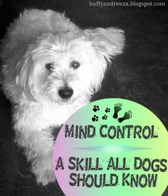 Mind control - A skill all #dogs should know written by my Buffy. #blog