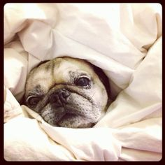 Snug as a pug in a rug.