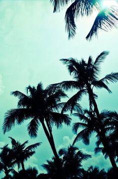 Teal palms