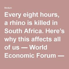 Every eight hours, a rhino is killed in South Africa. Here's why this affects all of us — World Economic Forum — Medium World Economic Forum, Eight, Wilderness, 30th, South Africa, Medium, Medium Length Hairstyles