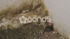 Caracol walks down the wall with fungi - Stock Footage | by BucleFilms