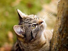 Photos et fonds d'écran - Chats: http://wallpapic.be/animaux/chats/wallpaper-31943