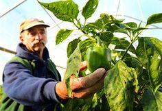 agrotikanew : Σε 7μηνιαίες δόσεις πληρωμή φόρου εισοδήματος αγρο...