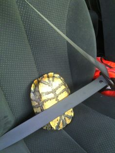 Just take all the proper precautions. | 20 Life Lessons We Can Learn From Turtles And Tortoises