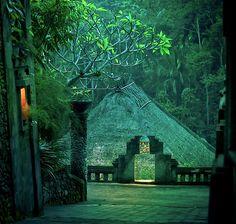 Green Rainforrest