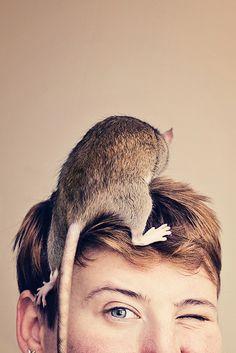 Rat Hat!