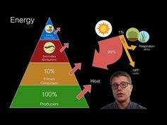 (3) Energy Flow in Ecosystems - YouTube