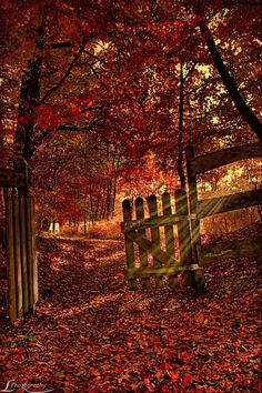 old gate and autumn leaves