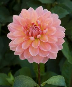 Sweetness - Corralitos gardens