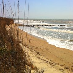 Edisto Island, SC A lovely place to go! Low Country, Country Living, Places Ive Been, Places To Visit, Edisto Beach, Edisto Island, Wish I Was There, Jimmy Buffett, Sea To Shining Sea