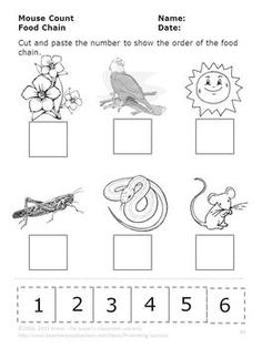 Worksheet Food Webs For Kindergarten Students food chain activity free printable 5 pages nice print i have compiled this wonderful mouse count packet which contains an incredible