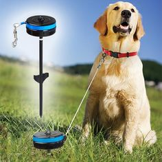 "RETRACTABLE PET REELRetractable cable tie for dogs Keep your dog happy and safe, in-ground tie-out stake. Designed for medium-sized dogs (25-80 lbs.), Extending up to 20 feet with a 360° rotating head, the Pet Reel allows your dog plenty of freedom while keeping him secured within a certain area. Bring it with you to the park, on picnics, and on camping trips! Steel, 21 ¾""L x 4 ¼""W x 4 ¼""H."