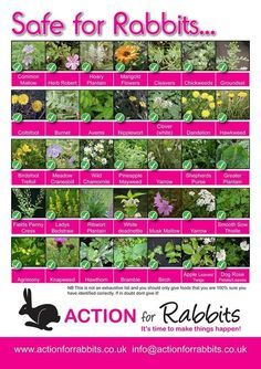 Safe plants for rabbits nice to know if you have free range pet rabbits.