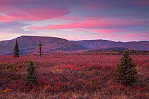 Teklanika Sunset Pictures