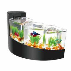 Tucker Murphy™ Pet Alan 20 Gallon Tower Square Aquarium Tank | Wayfair 20 Gallon Aquarium, Aquarium Kit, Shenzhen, Fish Tank Themes, Betta Fish Tank, Beta Fish, Biorb, Cascade Water, Curve Design