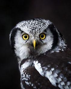 bfe54099 #birds #birdhouse #birdfeeders #birdhouseideas #birdsofprey #birdpainting  #birdsofparadies #bridstattoo