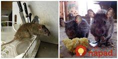 Potkany a myši sa na zimu usadili v garáži a nefungovala na ne ani otrava z obchodu. Toto nám poradil dedko a skutočne to zabralo! Ale, Funguje To, Animals, Animales, Animaux, Ale Beer, Animal, Animais, Ales