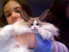 awww it's a cabbit lol