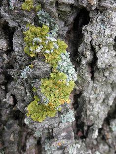 Senderismo y botánica: Musgo y Líquenes