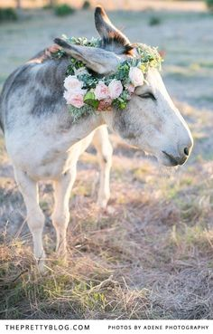 Pieter & Anneri's Whimsical Forest Shoot | Couples, Styled Shoots | The Pretty Blog
