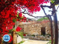 - Zorbas Island apartments in Kokkini Hani, Crete Greece 2020 Out Of The Closet, Crete Greece, Go Outside, Spring Break, To Go, Outdoor Structures, Island, Vacation, Safety Rules