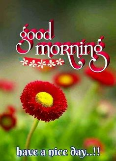 Good Morning Flowers Quotes, Good Morning Friends Images, Good Morning Beautiful Pictures, Happy Morning Quotes, Good Morning Beautiful Images, Good Morning Cards, Good Morning Picture, Good Morning Love, Good Morning Greetings