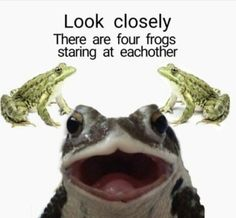 i forgot to post im sorry Fb Memes, Funny Memes, Hilarious, Sapo Frog, Sapo Meme, Funny Animals, Cute Animals, Frog Meme, Frog Pictures