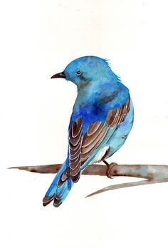 Bluebird watercolor painting  print of watercolor by Splodgepodge